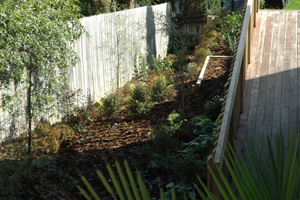 native planting on steep exposed clay bank