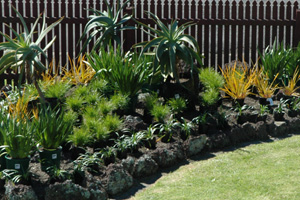 a rock garden with plants positioned ready for planting